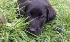Můj fotogenycký pes Ronny