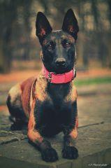 Lidé říkají, že lásku a přátelství si nelze koupit, avšak zapomněli na psa
