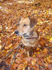 Betty - Ladíme s podzimem
