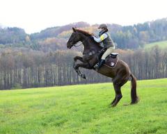 wild mare ... :)  <3